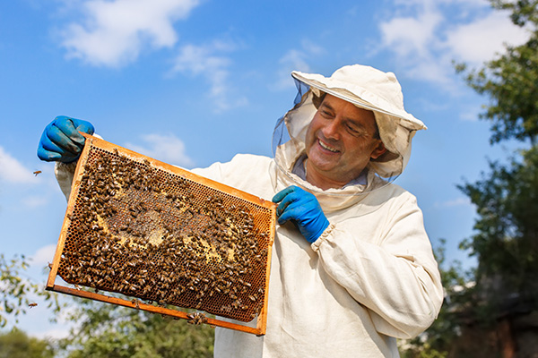 beekeeper with honeycomb in the apiary